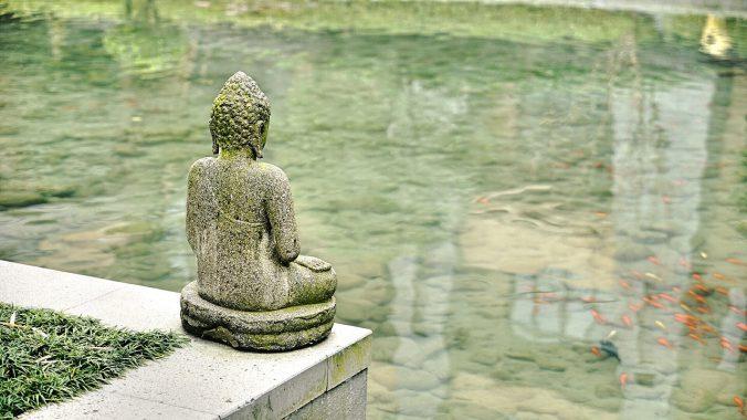 Jiaogulan - Chinesischer Jungbrunnen auf thedandy.de