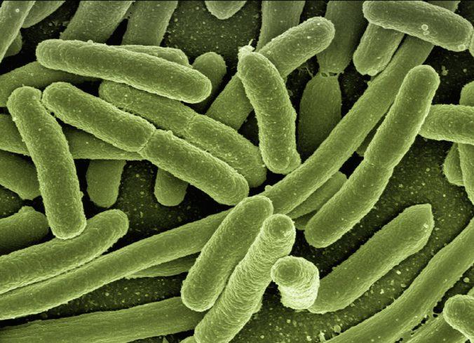 Das Mikrobiom – Die Darm Hirn Achse auf thedandy.de